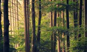bosco modificato 1