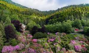 oasi zegna fioritura